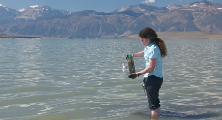 Geomicrobiologist Felisa Wolfe-Simon, collecting lake-bottom sediments in the shallow waters of Mono Lake in California. Wolfe-Simon cultured the arsenic-utilizing organisms from this hypersaline and highly alkaline environment. Credit: ©2010 Henry Bortman