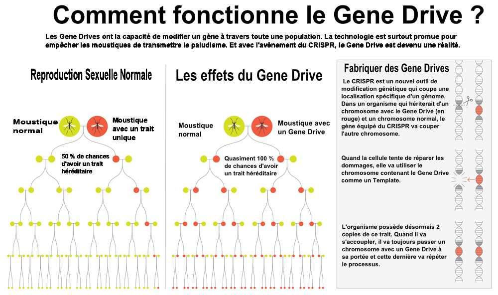 Une illustration sur le fonctionnement du Gene Drive