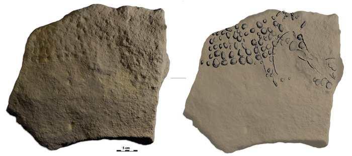 Un dessin en pointillé représentant un mammouth dans le site archéologique connu comme l'Abri Cellier - Crédit : R. Bourrillon.