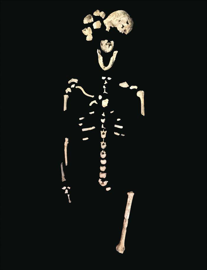 Découverte d'un nouveau squelette de l'Homo Naledi surnommé Néo dans la chambre Lesedi - Crédit : Wits University/JohnHawks