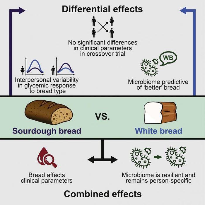 Le résumé de l'étude avec des personnes qui ont mangé du pain blanc ou du pain de blé entier. Les effets ne sont pas cliniquement significatifs sur les personnes, mais les réactions glycémiques sont différentes pour chaque personne - Crédit : Korem et al./Cell Metabolism 2017