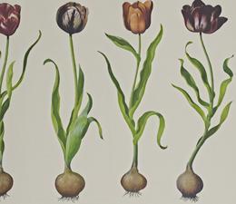 TulipsWallpaper1