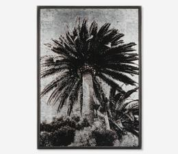 Venice_Palm_Artwork_Front