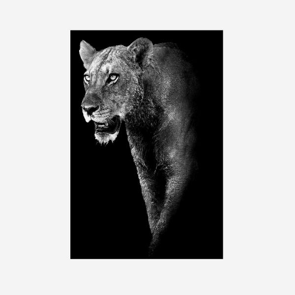 Lioness_Prowess