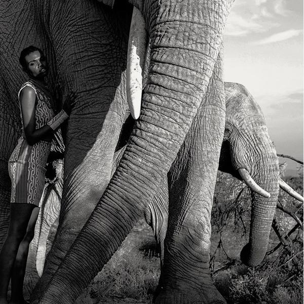 Elephant_Admiration_Artwork