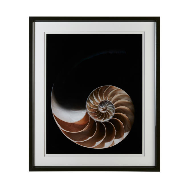 Nature_s_Spiral_ACC2985_
