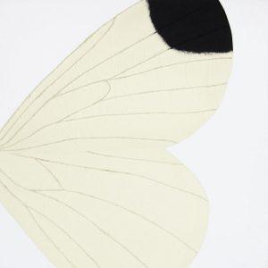 ali spago insetto entomologia black&withe