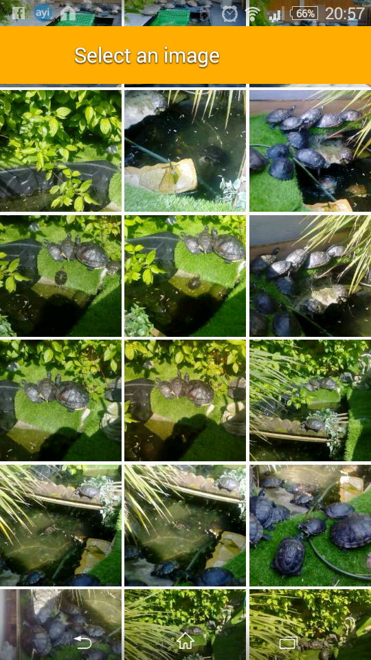 Image 2 of turtles/terrapins rescue .. fb turtle man rescue Liverpool