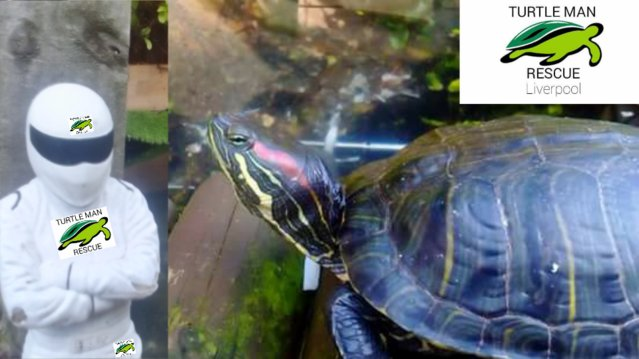 Image 3 of Turtle man rescue...Liverpool