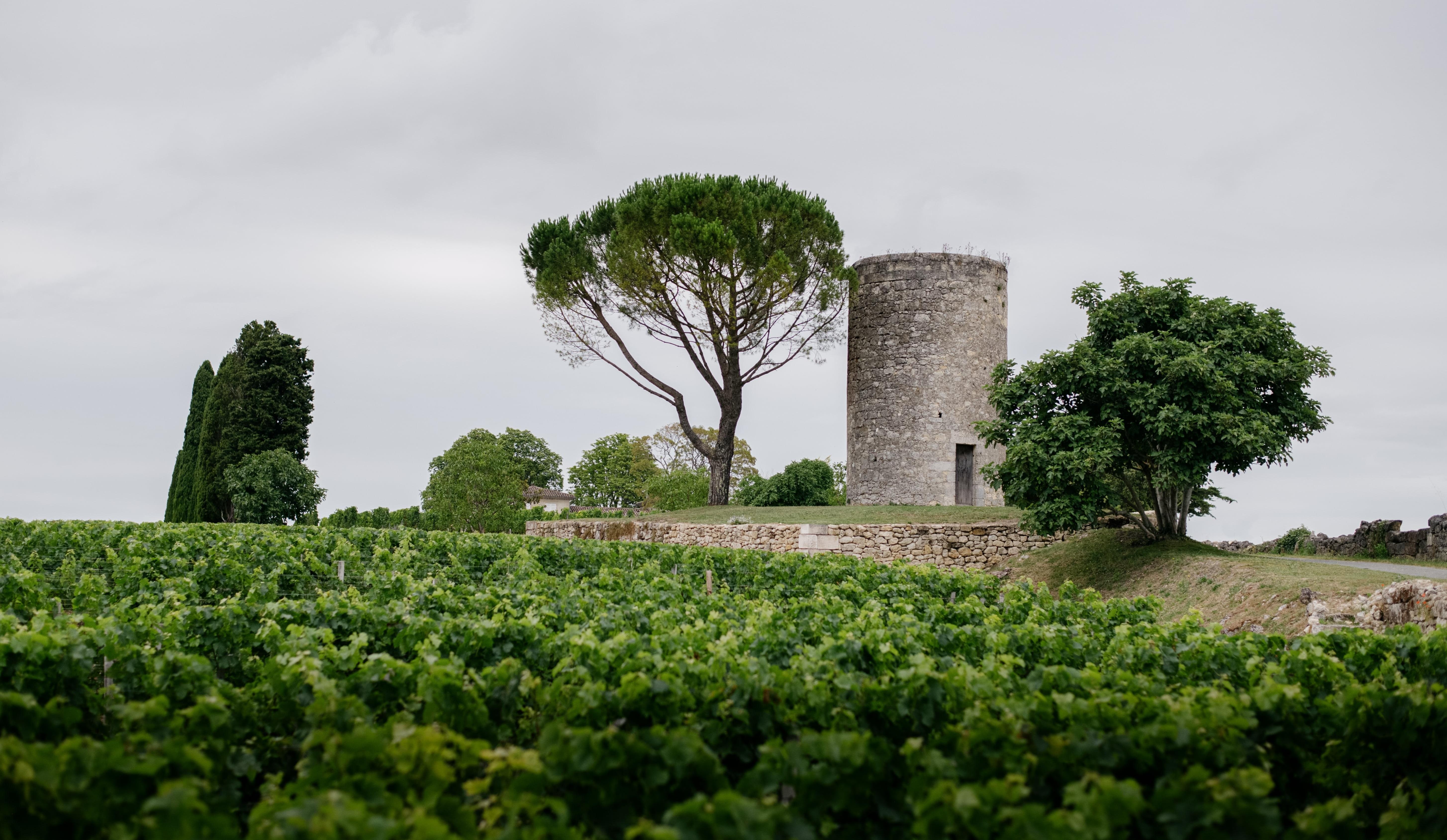 16_chateau_berliquet_vignoble-web