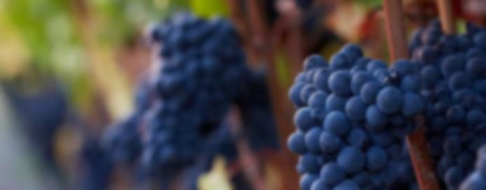2016 Burgundy Vintage Report and Offer