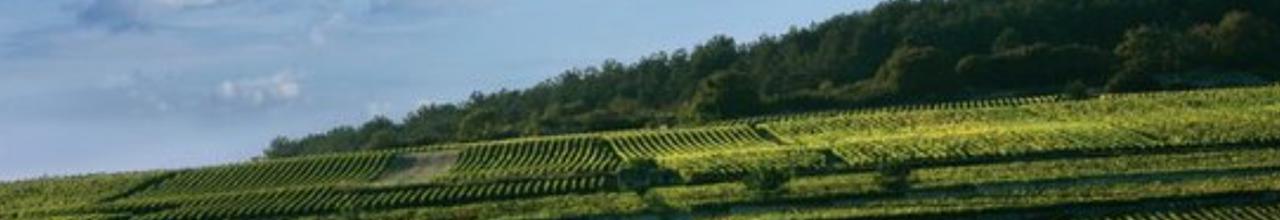 Burgundy-2017