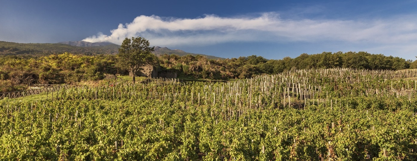 2019 Etna Rosso, 'Contrada Monte Serra', Benanti : class and distinction from the slopes of Etna