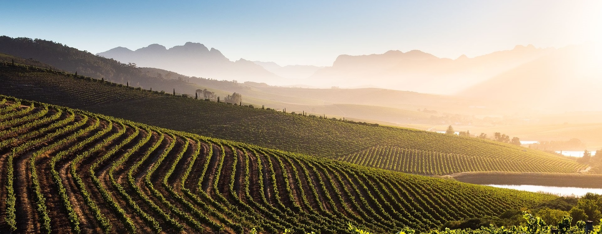 2018 Reserve Chardonnay: Another absolute knock-out from Stellenbosch's DeMorgenzon