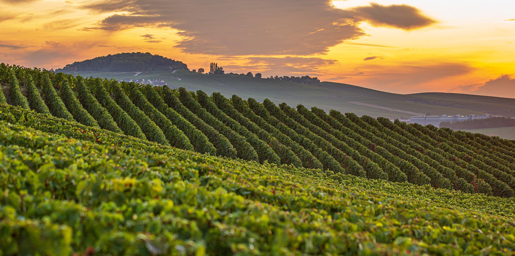 Taittinger-vineyards-sunset-2019