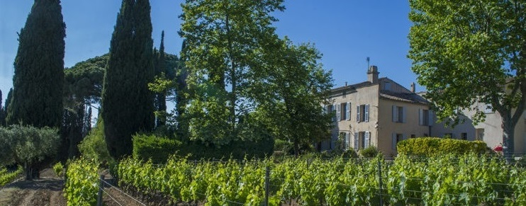 2019 Domaine Tempier Rosé - The new vintage of one of the world's best rosé
