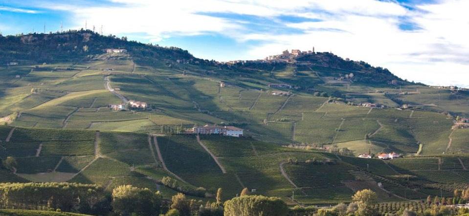 vineyard - web