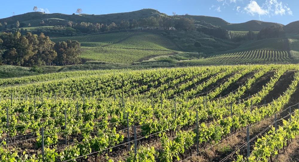 web vineyard