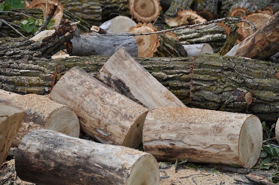 Taglio boschi
