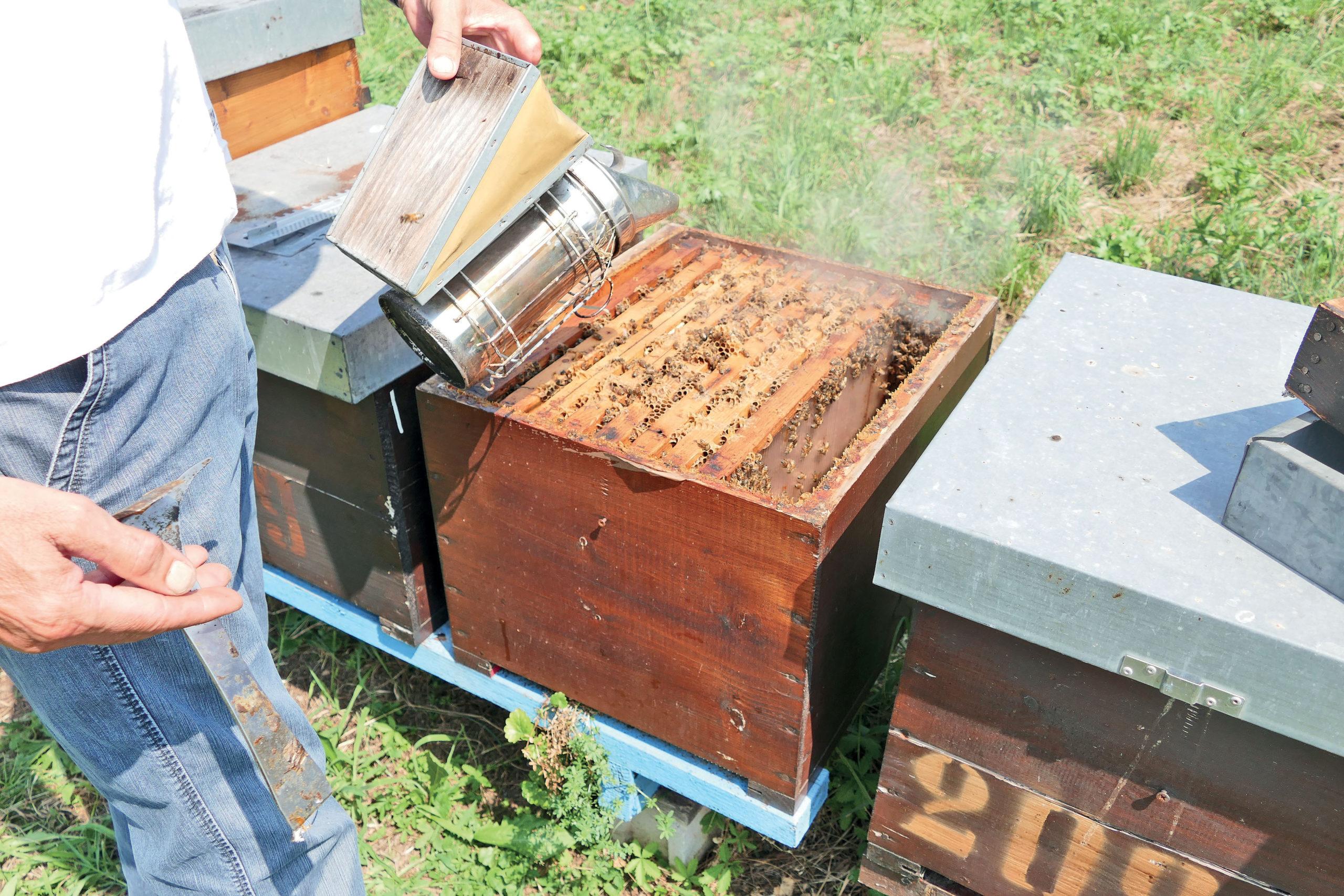 api confagricoltura piemonte