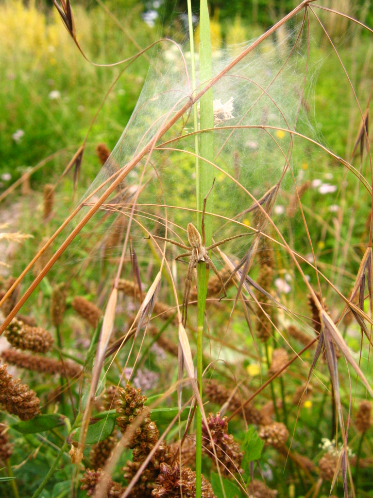 A spider on the grasses of the Ecological Mound.