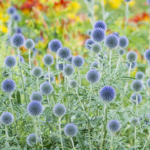 Herbaceous Beds