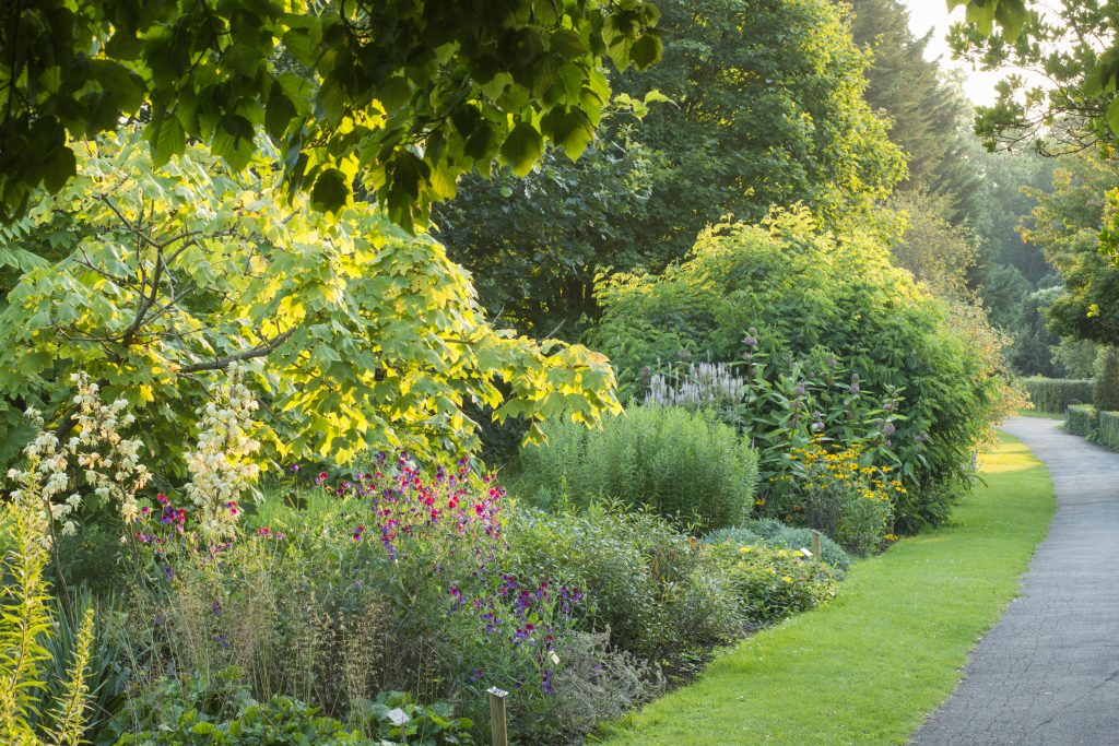 A path running alongside the Chronological Bed, which is growing flowers of various shapes, sizes and colours.