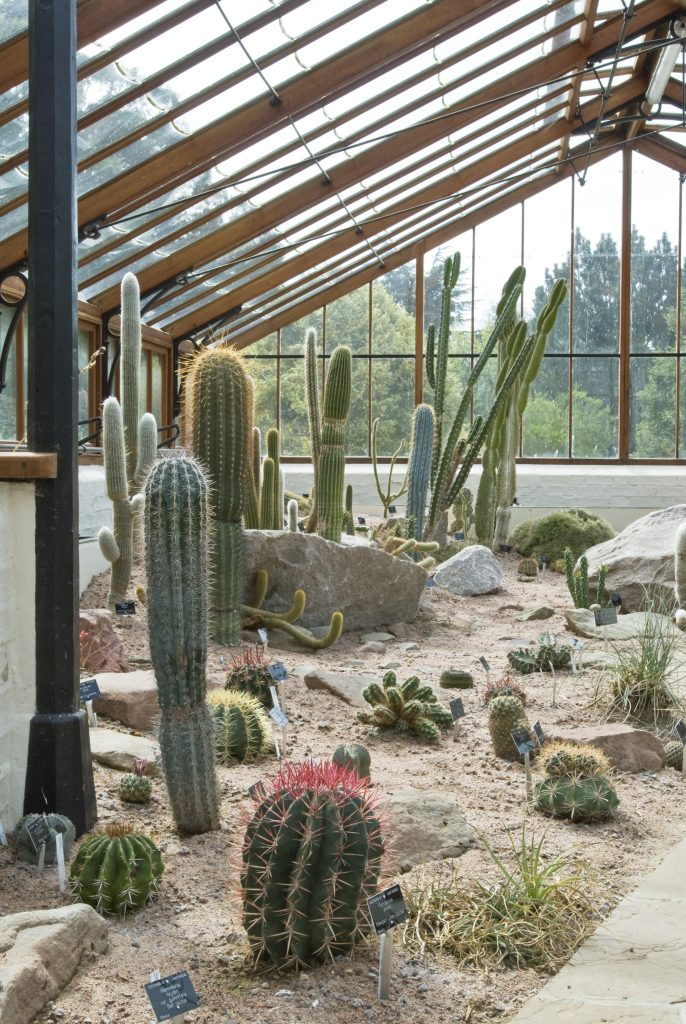 The Arid lands display, which consists of cacti and succulents.