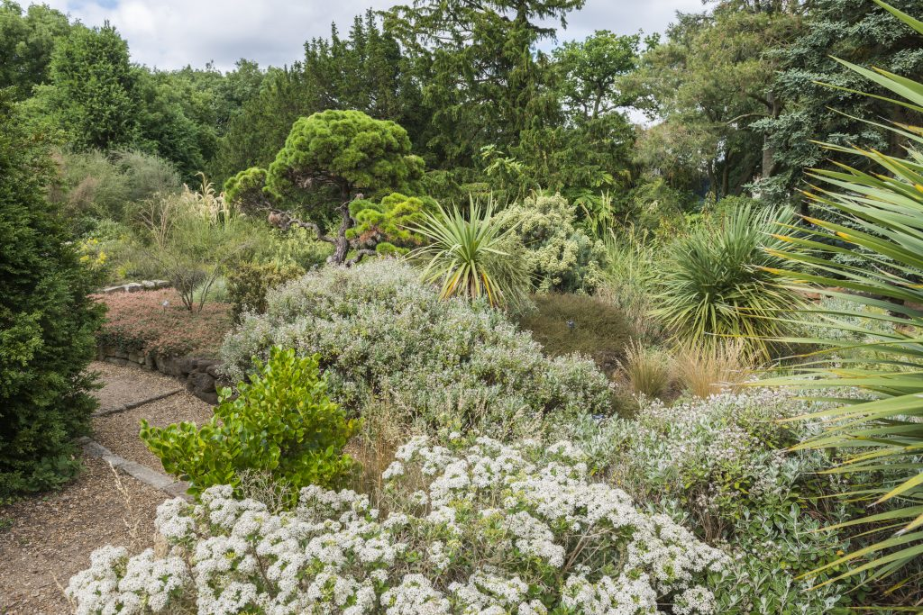 Textured plantings in the Terrace Garden (New Zealand Flora).
