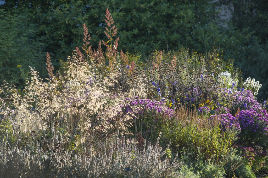 Herbaceous Island Beds in early Autumn. Purple, white and blue mixed blooms.