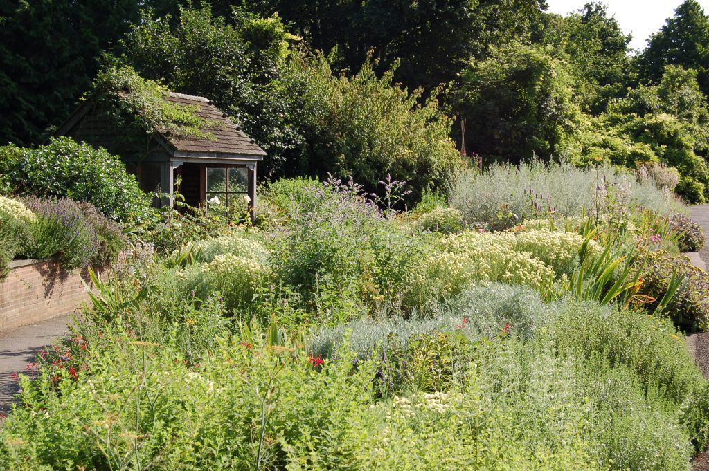 The Scented Garden, in its full summer glory.