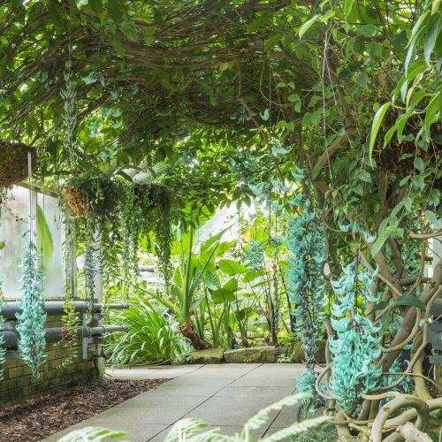CUBG receives Botanic Gardens Conservation International (BGCI) Accreditation Award