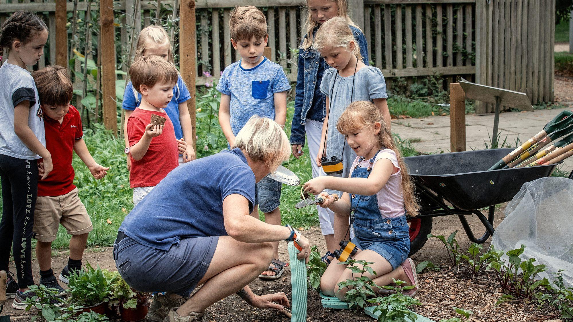 Vegetable gardening with children in the Schools' Garden.