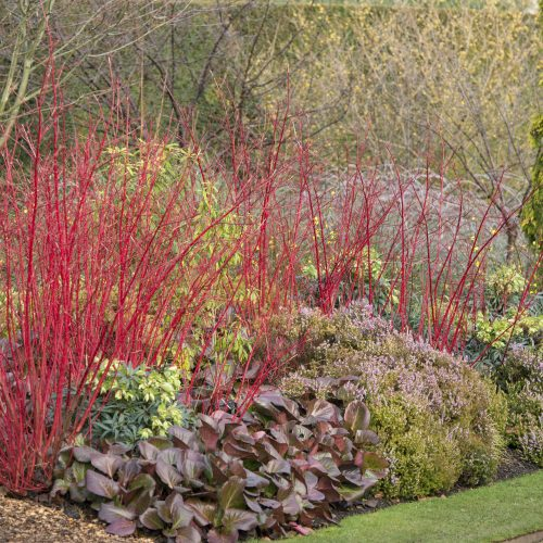 Cambridge University Botanic Garden is open