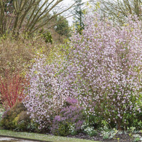 Take an audio tour around our Winter Garden