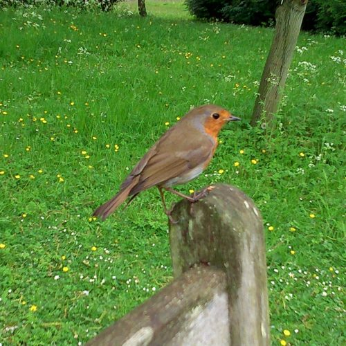 A Guide to Birdsong