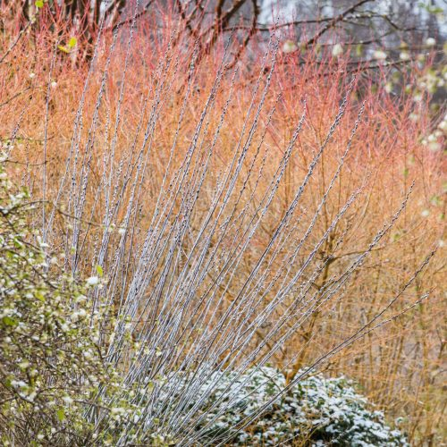 Top 10 plants for winter interest