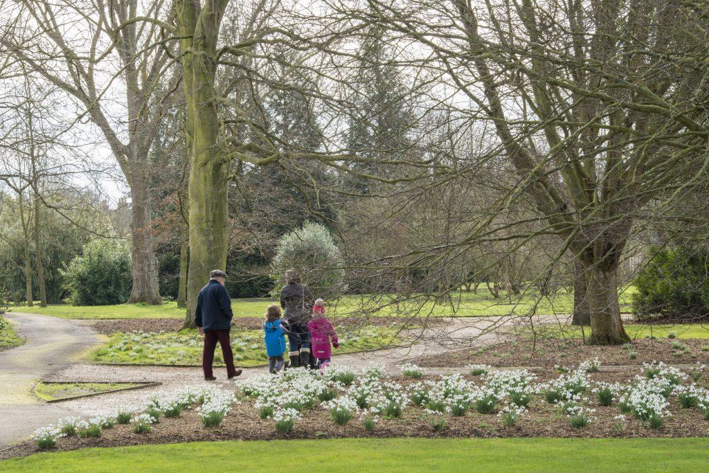 Snowdrops at the Botanic Garden