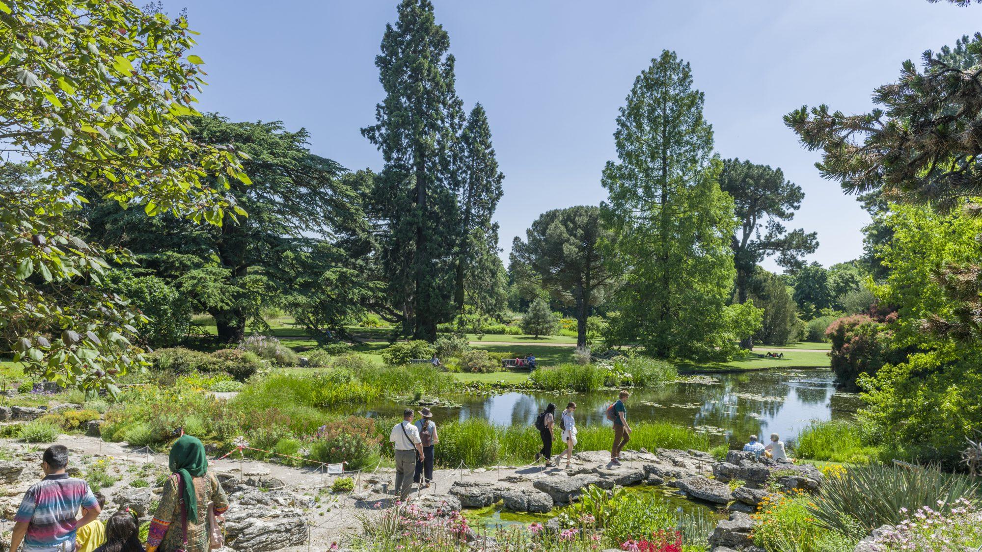 Rock garden, looking onto the main walk.