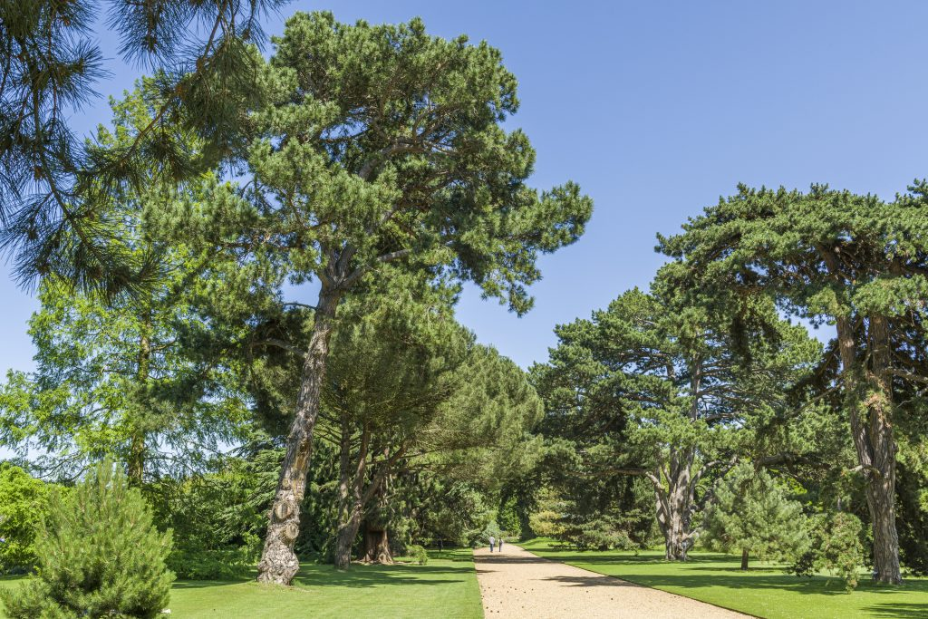 The Main Walk, designed in the 1840s, the wide gravel path is flanked by majestic, coniferous trees.