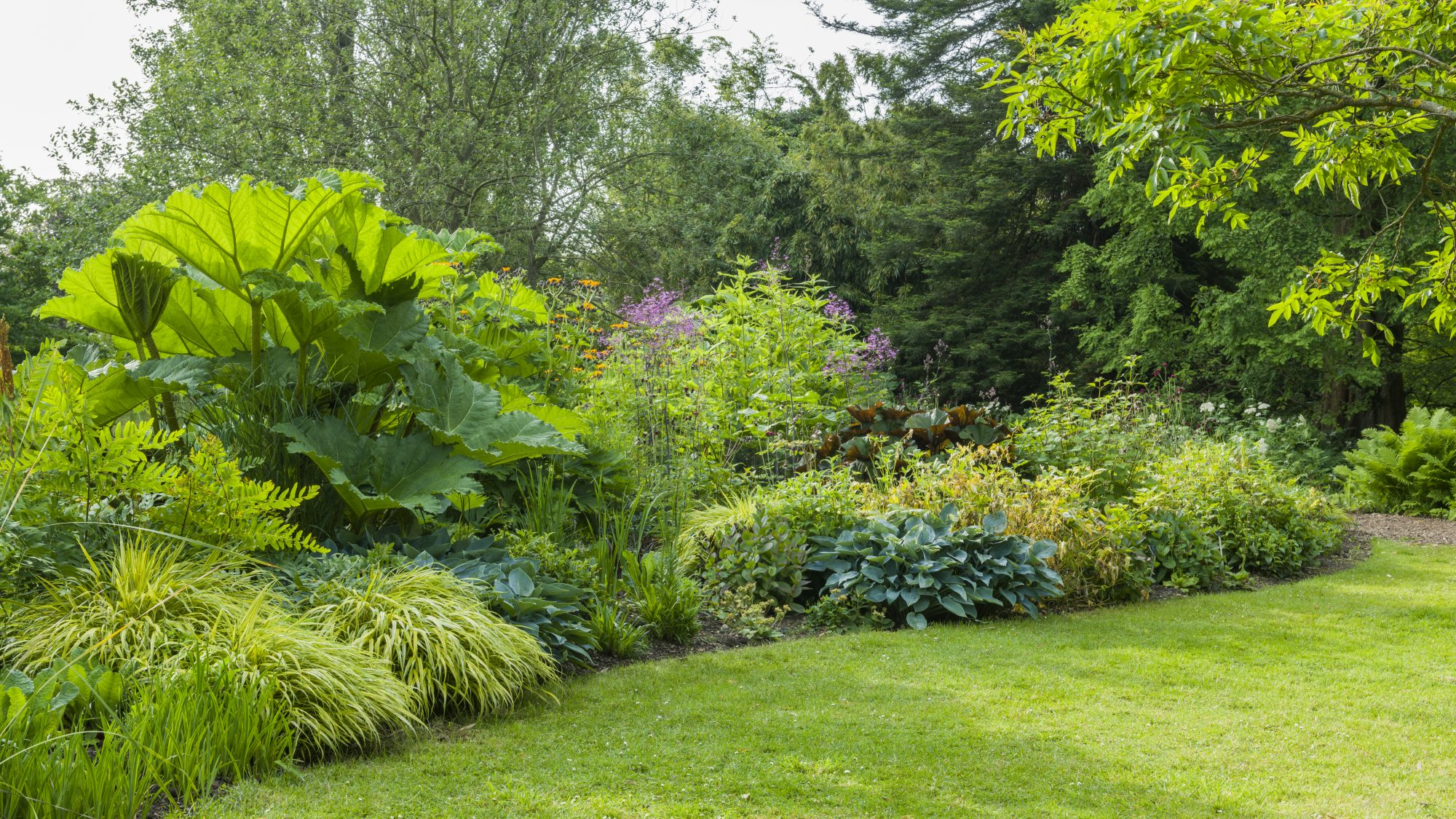 The Stream Garden bursting with summer foliage, including the giant Gunnera manicata.