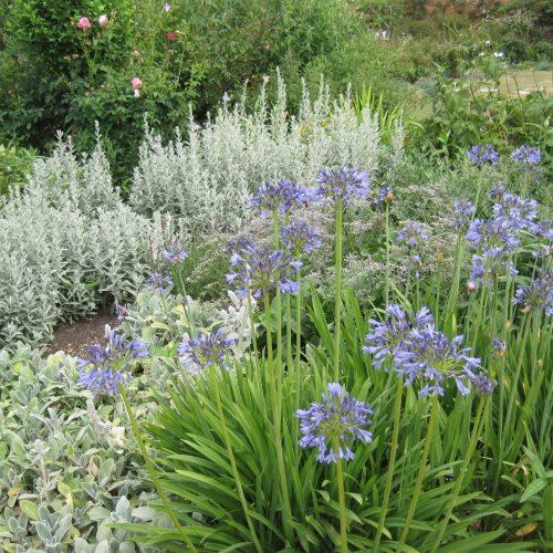 ONLINE COURSE: The Edwardian flower garden