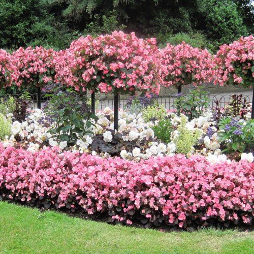 ONLINE COURSE: The Victorian flower garden
