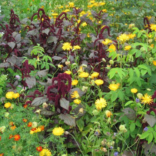 ONLINE COURSE: The Elizabethan flower garden