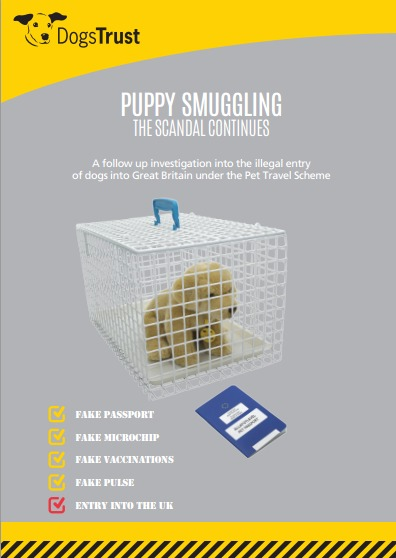 THE EUROPEAN PUPPY SMUGGLING SCANDAL CONTINUES