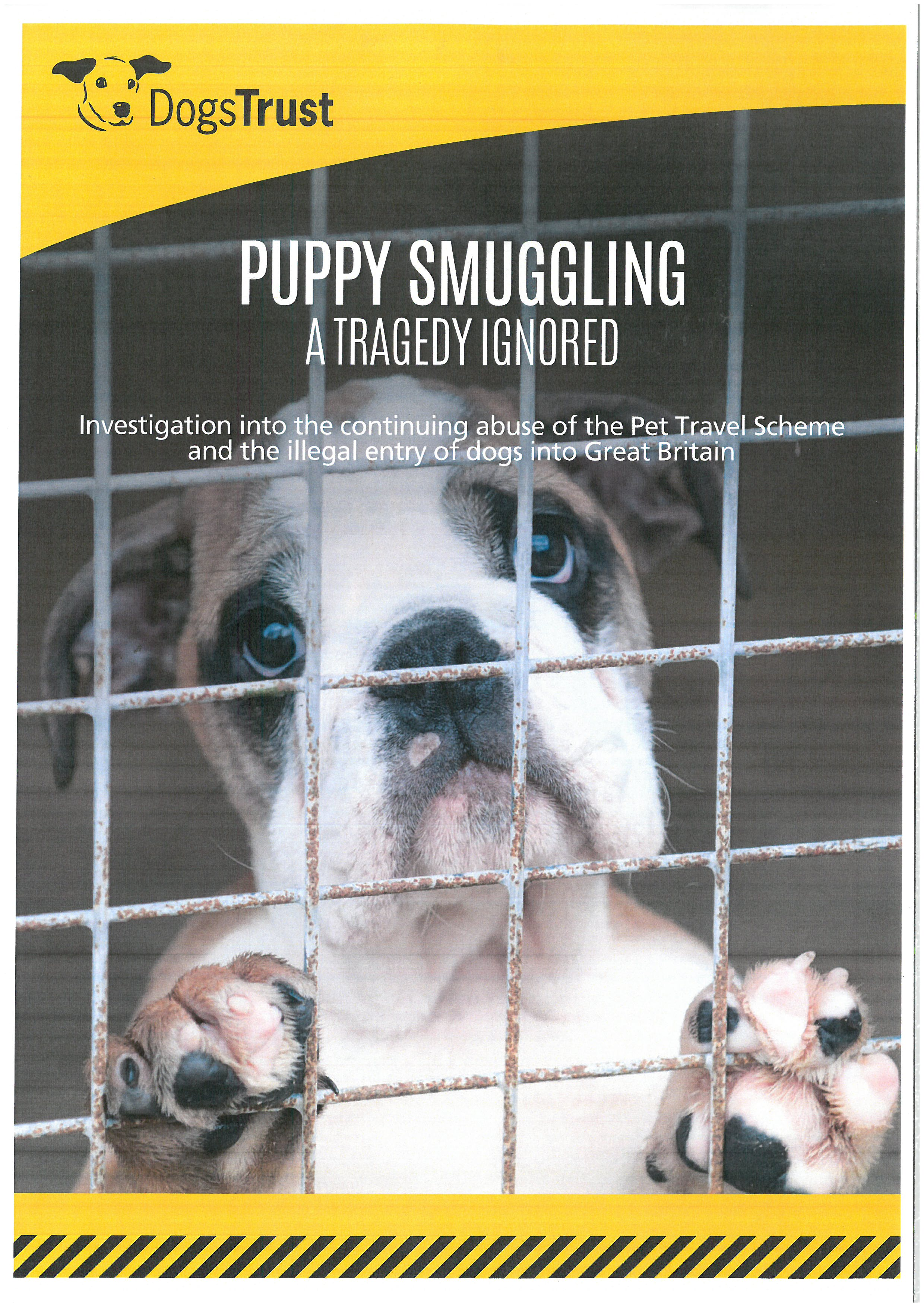 Puppy Smuggling: A Tragedy Ignored