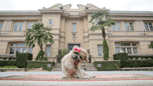 Cute dog in front of a lavish house