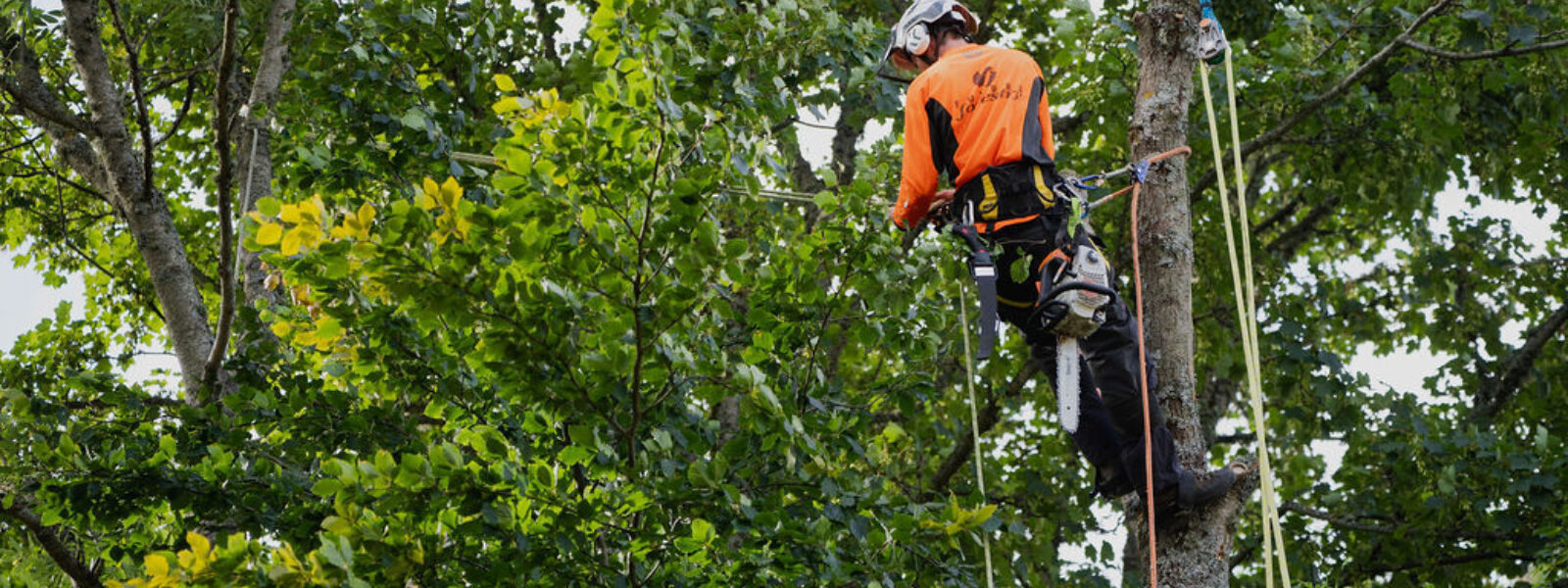 SCOTLAND'S TREE AND WOODLAND SPECIALISTS FOR OVER 20 YEARS