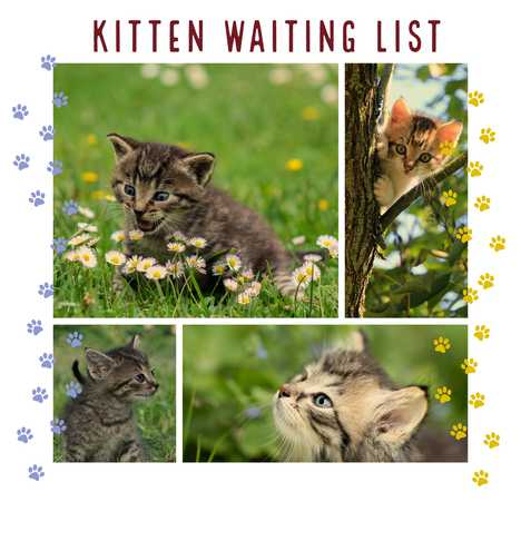 Waiting list for kittens