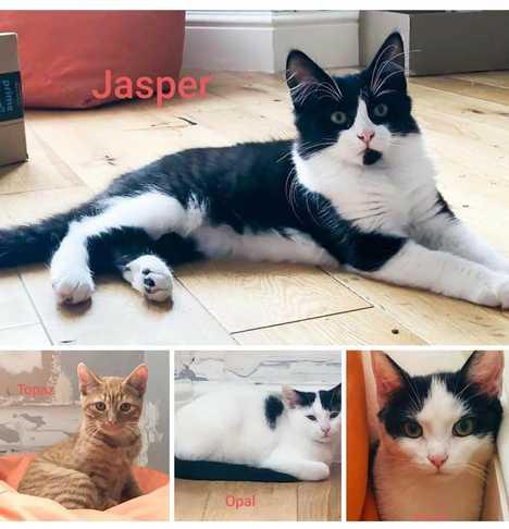 Topaz and Jasper